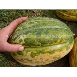 Cucumis melo 'Kroumir' - Melon