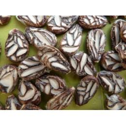 Citrullus lanatus  'Cekirdegi' - Pastèque (Graines / seeds)