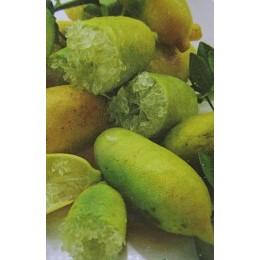 Microcitrus australasica 'Sunschine Yellow' - Citron Caviar (Agrume)