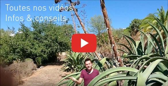 Vidéo Le Jardin des Curieux - Baptiste PIERRE - Toutes nos vidéos, conseils et astuces jardin + télé Vendée