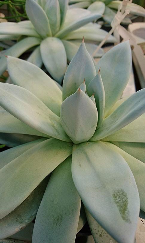 un large choix pour les amoureux des fleurs, des plantes graphiques et des plantes rares