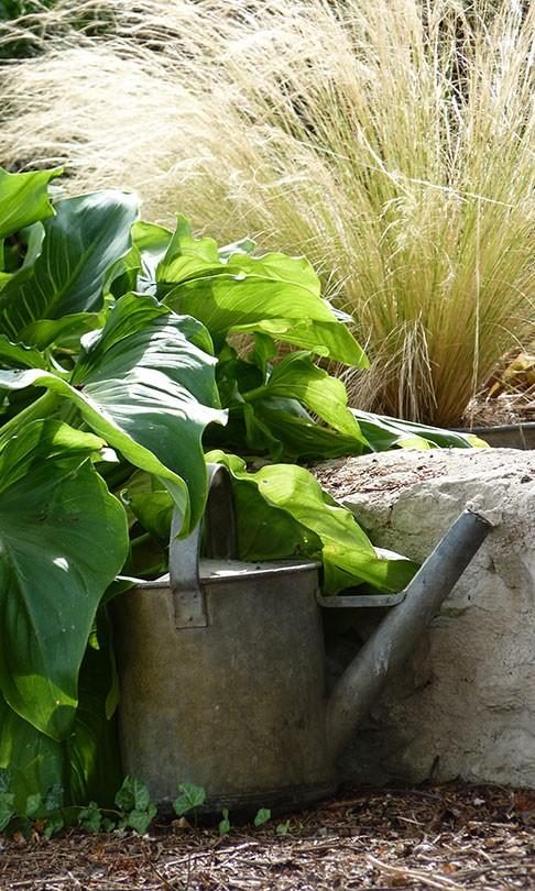 Graphique, souplesse, élégance et légèreté... pour pots et petits jardins