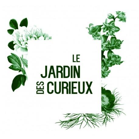 Apium graveolens 'Violet de Tours' - Céleri cote (Graines / seeds)