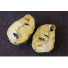 Asimina Triloba - Asiminier (Autofertile) ou Paw Paw