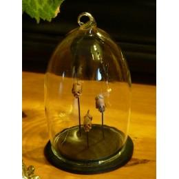 Véritable fruit tête de mort -  sous cloche en verre