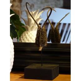 Griffe du diable sur socle (Ibicela lutea)