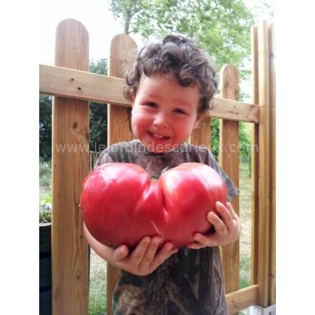 Tomate géante 'Big Zac' - Grosse tomate de concours (graines / seeds)