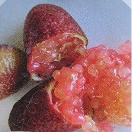 Microcitrus australasica 'Pink Ice' - Citron Caviar rose (Agrume rare)