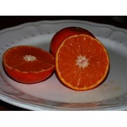 Citrus unshiu 'Mucurinec' - Mandarine rustique (Agrumes)