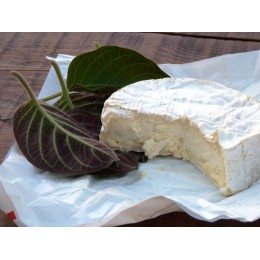 Paederia lanuginosa - Plante au goût de Fromage (La Mo Long)