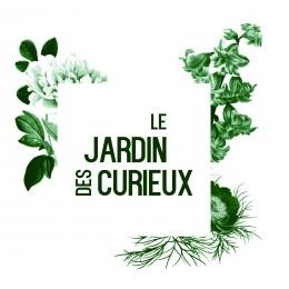 "Vitis vinifera ""Litchi"" - Vigne / Raisin de table (plant)"