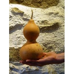 Calebasse / Gourde sèche N°6 - Déco cabinet de curiosités végétales
