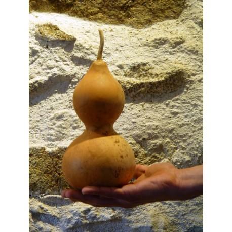 Calebasse / Gourde sèche N°5 - Déco cabinet de curiosités végétales