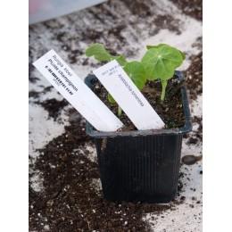 Etiquettes de jardin à piquet - blanche