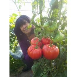 Tomate géante 'Delicious' - Grosse tomate de concours (graines / seeds)