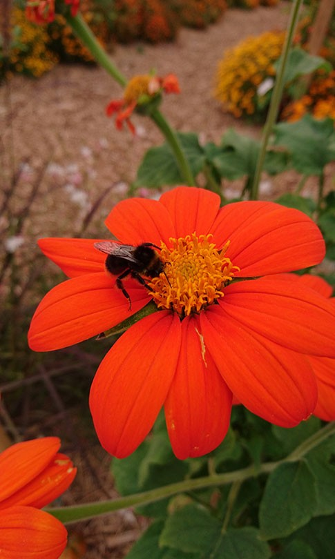 fleurs d'été ou de printemps, découvrez notre sélection atypique !